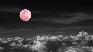 Photo of The Full Pink Moon 2019