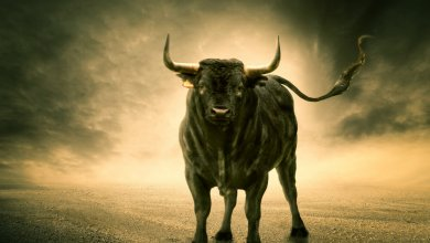 The Story of Star-Bull Taurus