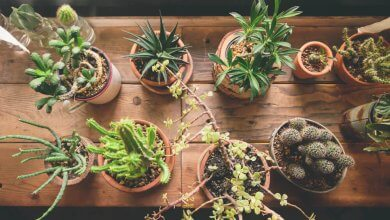 Houseplant Based on Your Zodiac