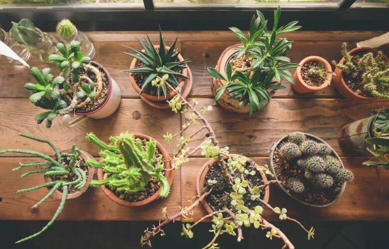 Houseplant Based on Your Zodiac
