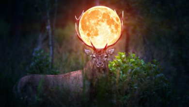 Photo of The Full Buck Moon 2019