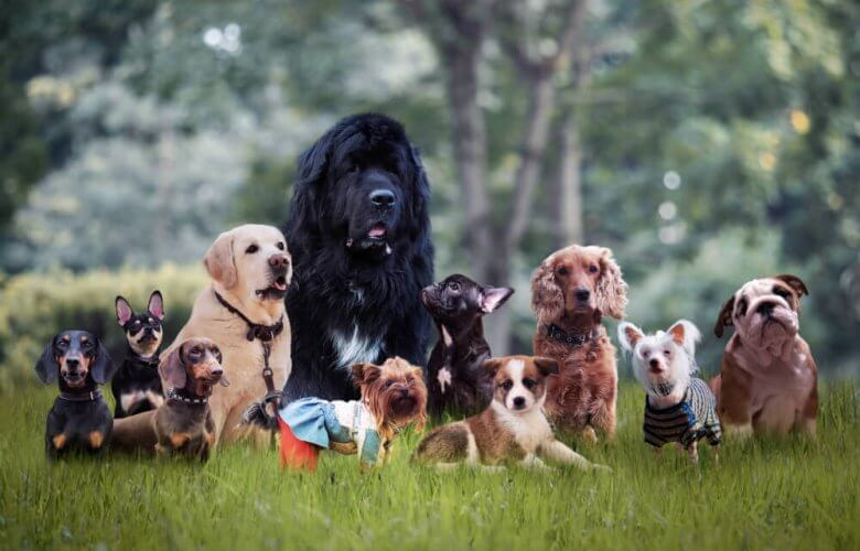 Most Compatible Dog Breed with Your Zodiac Sign