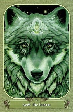 Seek The Lesson tarot card