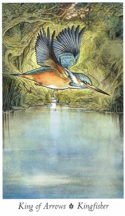 King of Arrows Kingfisher