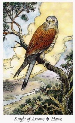 Knight of Arrows Hawk