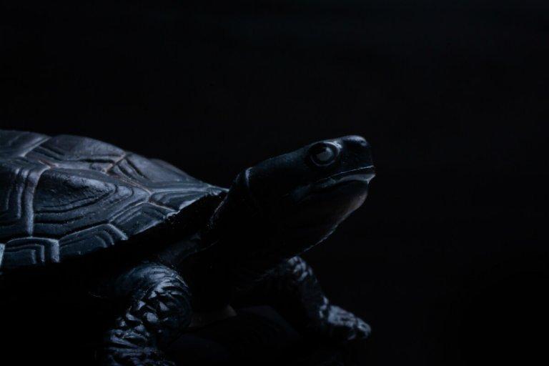 Feng Shui Black Tortoise