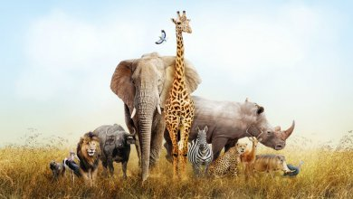 Photo of Which Wild Animal Are You According to Your Zodiac Sign?