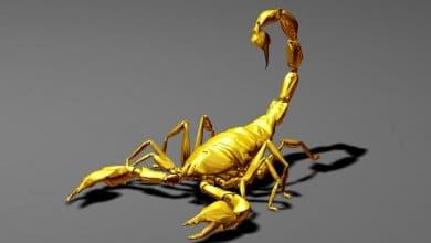 Photo of Scorpio…The Celestial Scorpion