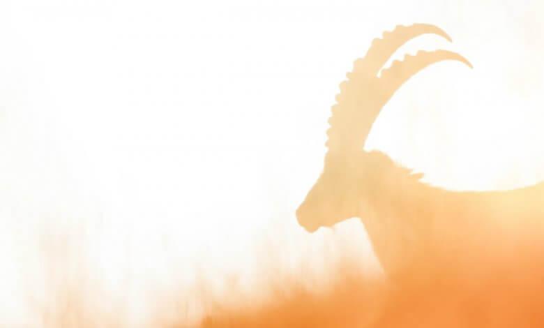 Photo of Capricorn the Cosmic Sea-Goat