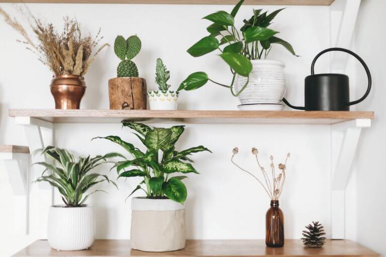 Living Feng Shui Cures Houseplants