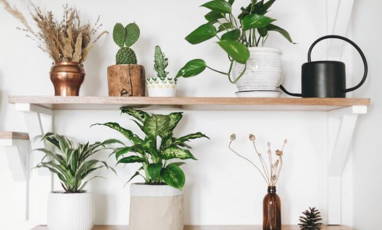 Living Feng Shui Cures Houseplants
