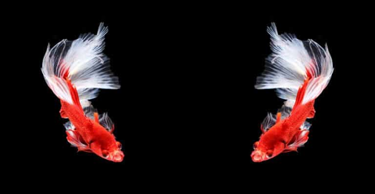 Meaning of Twin Flame
