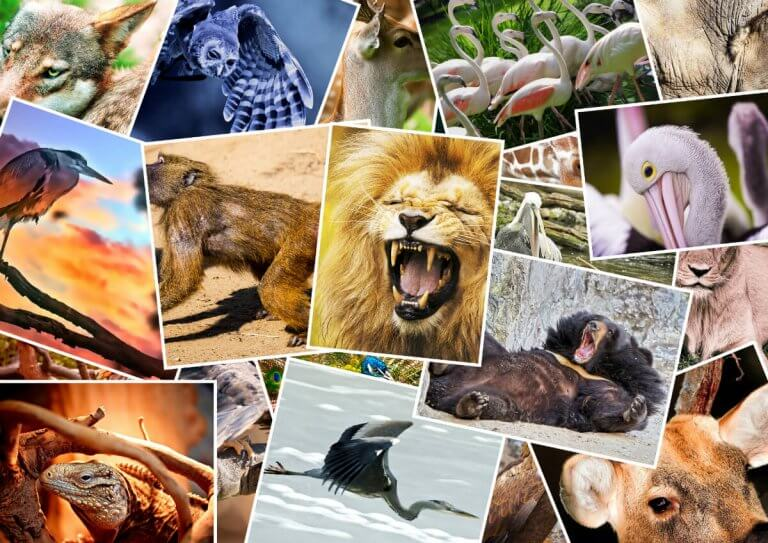 How the Major Arcana is Associated with Animals