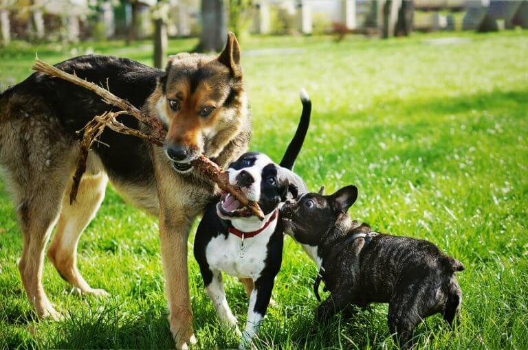 How the Major Arcana is Associated with Dog Breeds