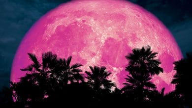 Photo of The Full Pink Moon 2020