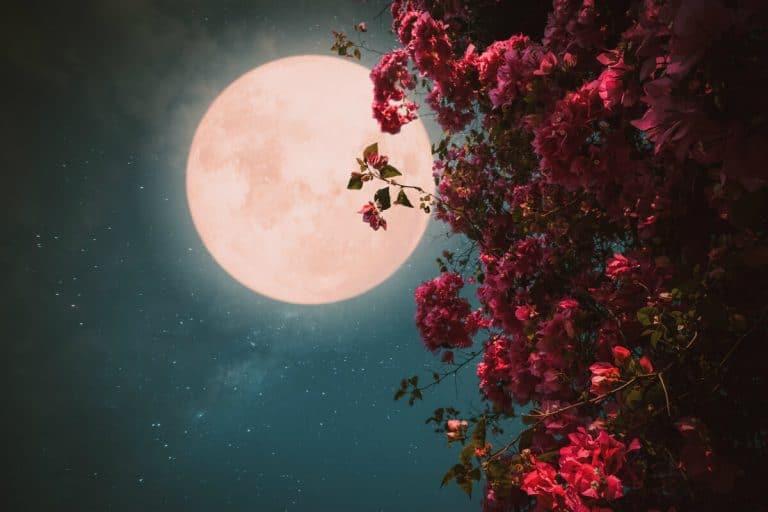 Full Flower Moon 2020