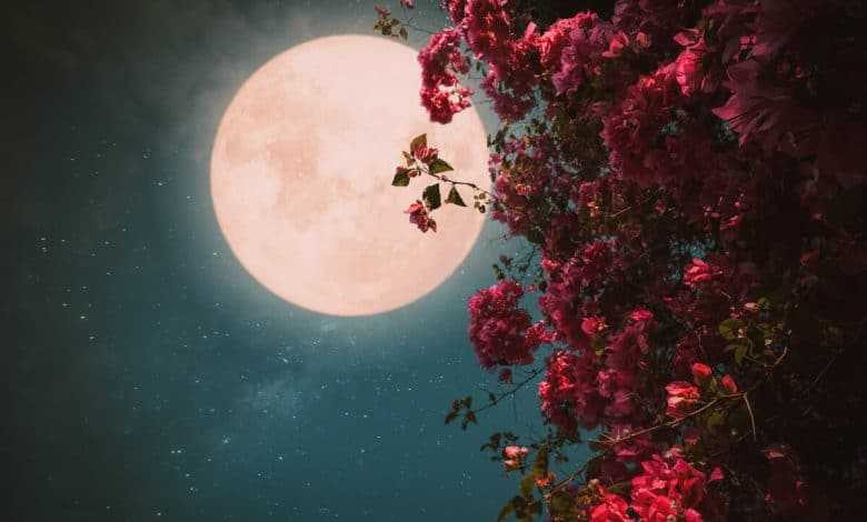 Full Flower Moon 2020