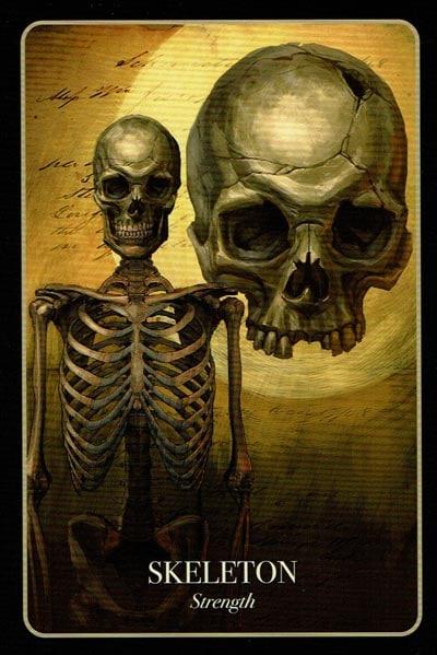 Halloween Oracle Skeleton