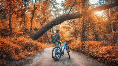 Photo of What Is Your Favorite Fall Activity According to Your Zodiac Sign?