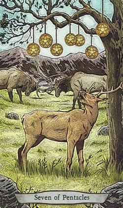 Animal Totem Tarot 7 of Pentacles Elk card