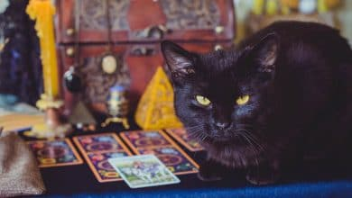Photo of The Best Animal Tarot Decks