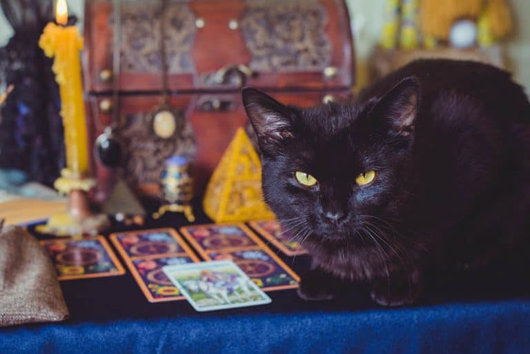 The Best Animal Tarot Decks