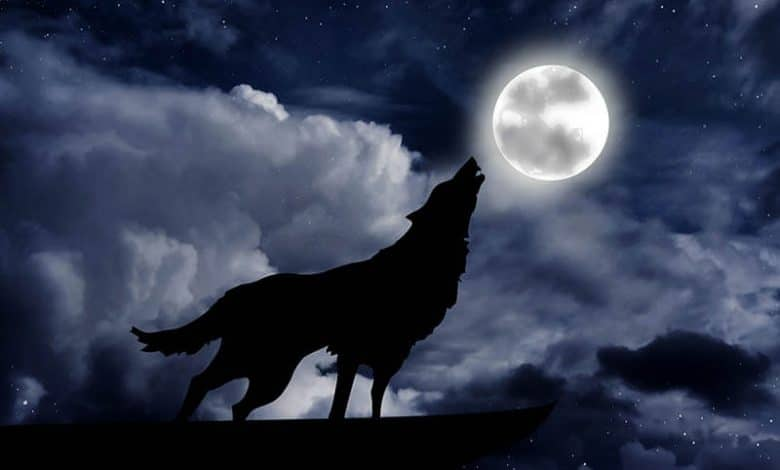 Photo of The Full Wolf Moon 2021