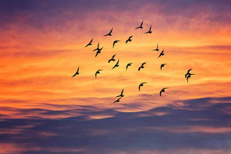 Secret Messages from the Birds Connected to Your Zodiac Sign