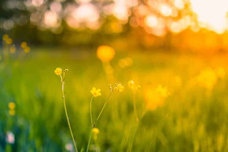 Intuitive Life Path Messages for July 2021