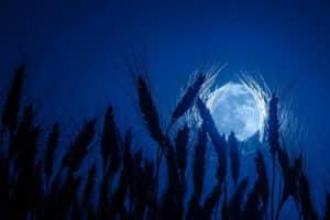 Full Harvest Moon 2021