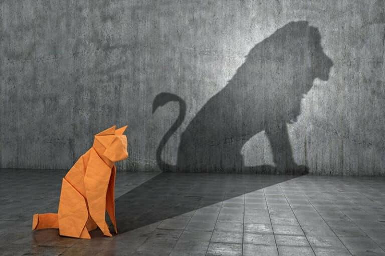 Shadow Work and Manifestation